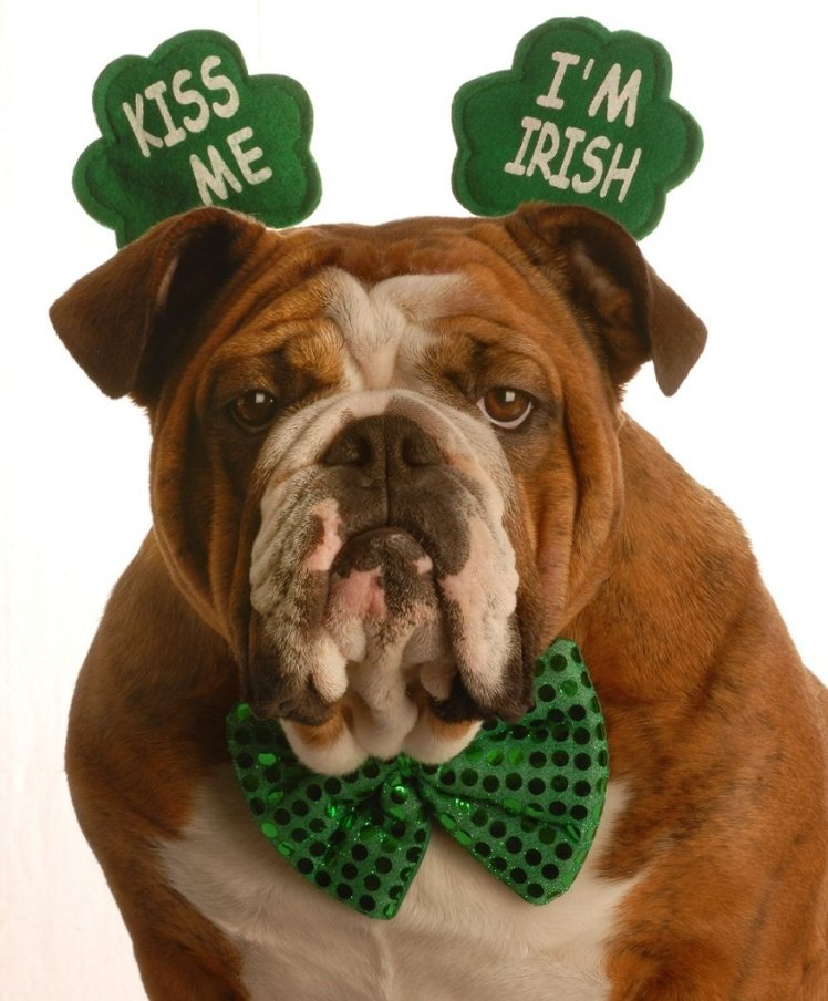 Bulldog St Patty